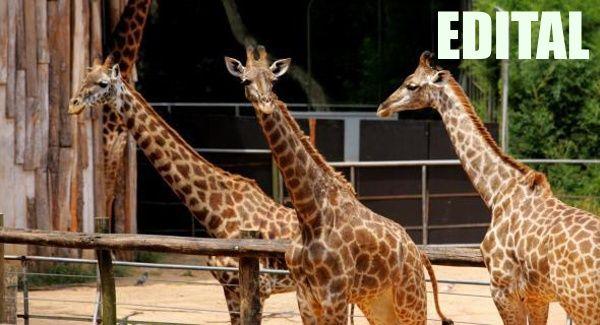 concurso-zoologico-edital